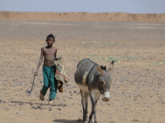 Young boy herding his donkey